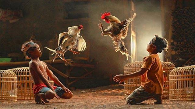 Permainan Judi Sabung Ayam Online